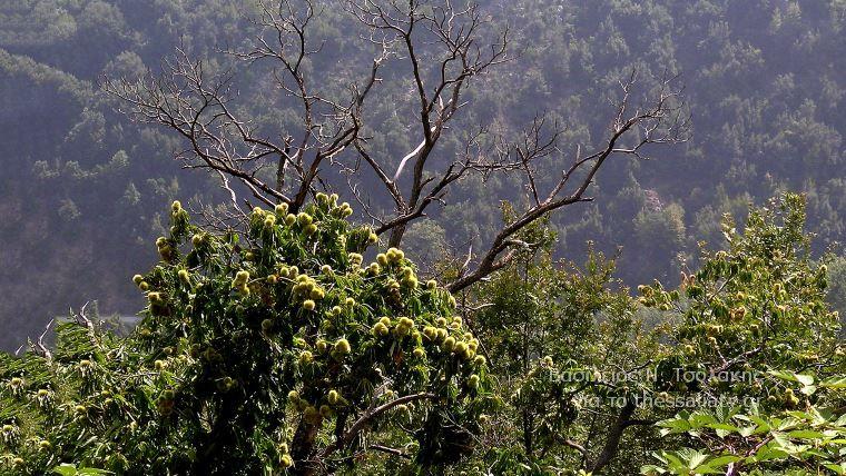 Το δάσος του Πολυδεντρίου στο Μαυροβούνιο