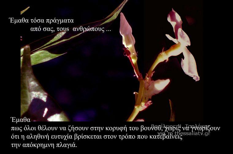Τα άνθη του....καλού
